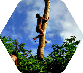 Boy from the Blue Creek Village in Belize climbs up a tree to scare Iguanas.