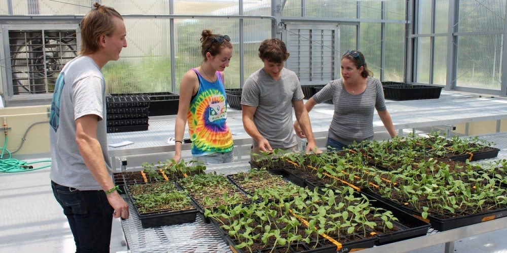 Students and professor in James Center greenhouses