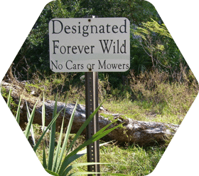 "Sign in grassy area that reads ""Designated Forever Wild No Cars or Mowers"""
