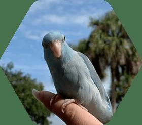 Eckerd pet parrot