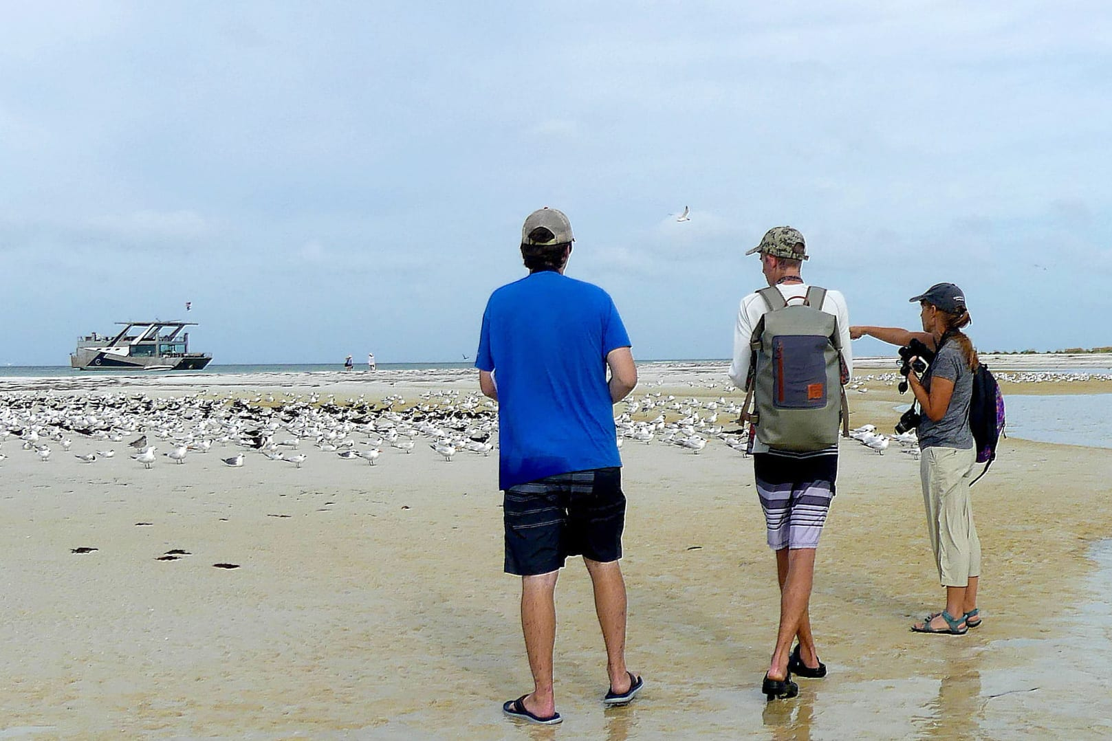 Professor pointing to seabirds on Outback Key