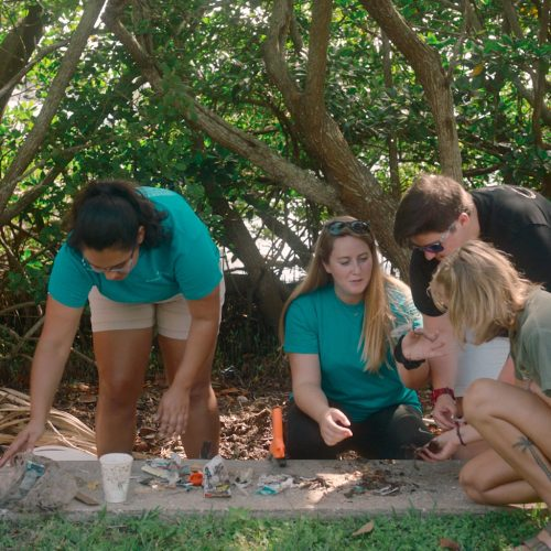 Eckerd College students collecting plastic along mangrove shores