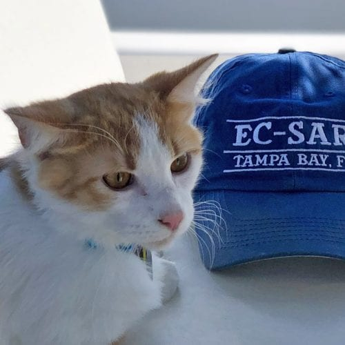 Skyway the cat was a stray cat picked up by Eckerd College Search and Rescue
