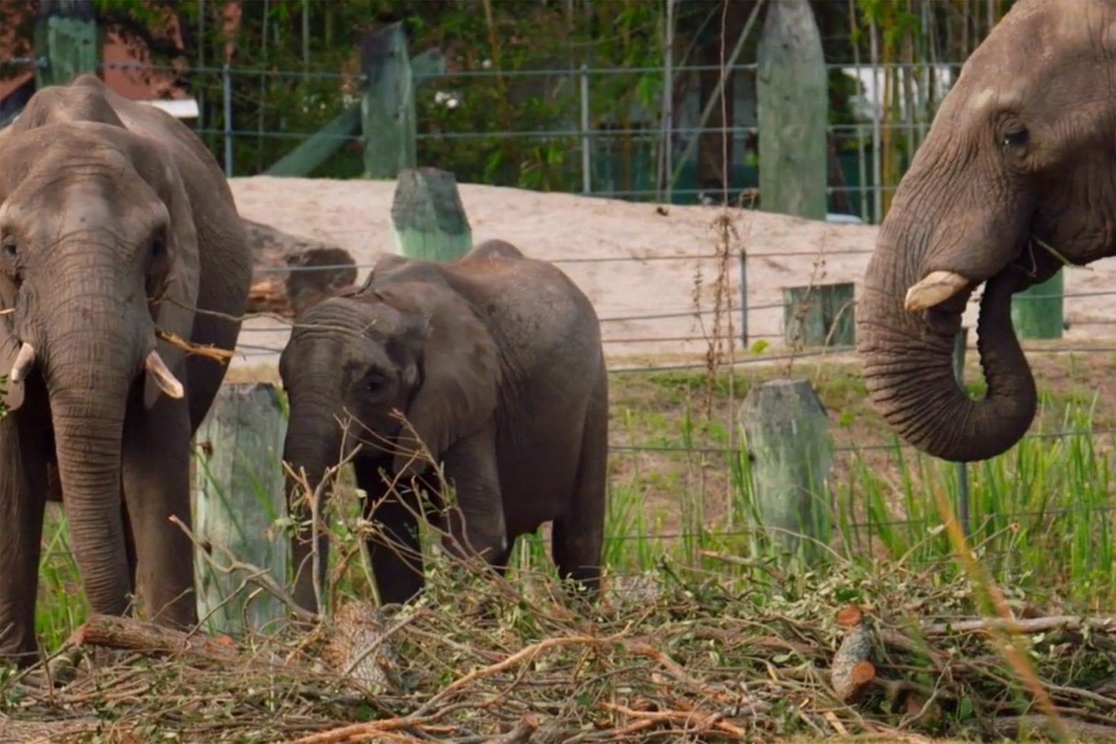 Elephants at a zoo eating