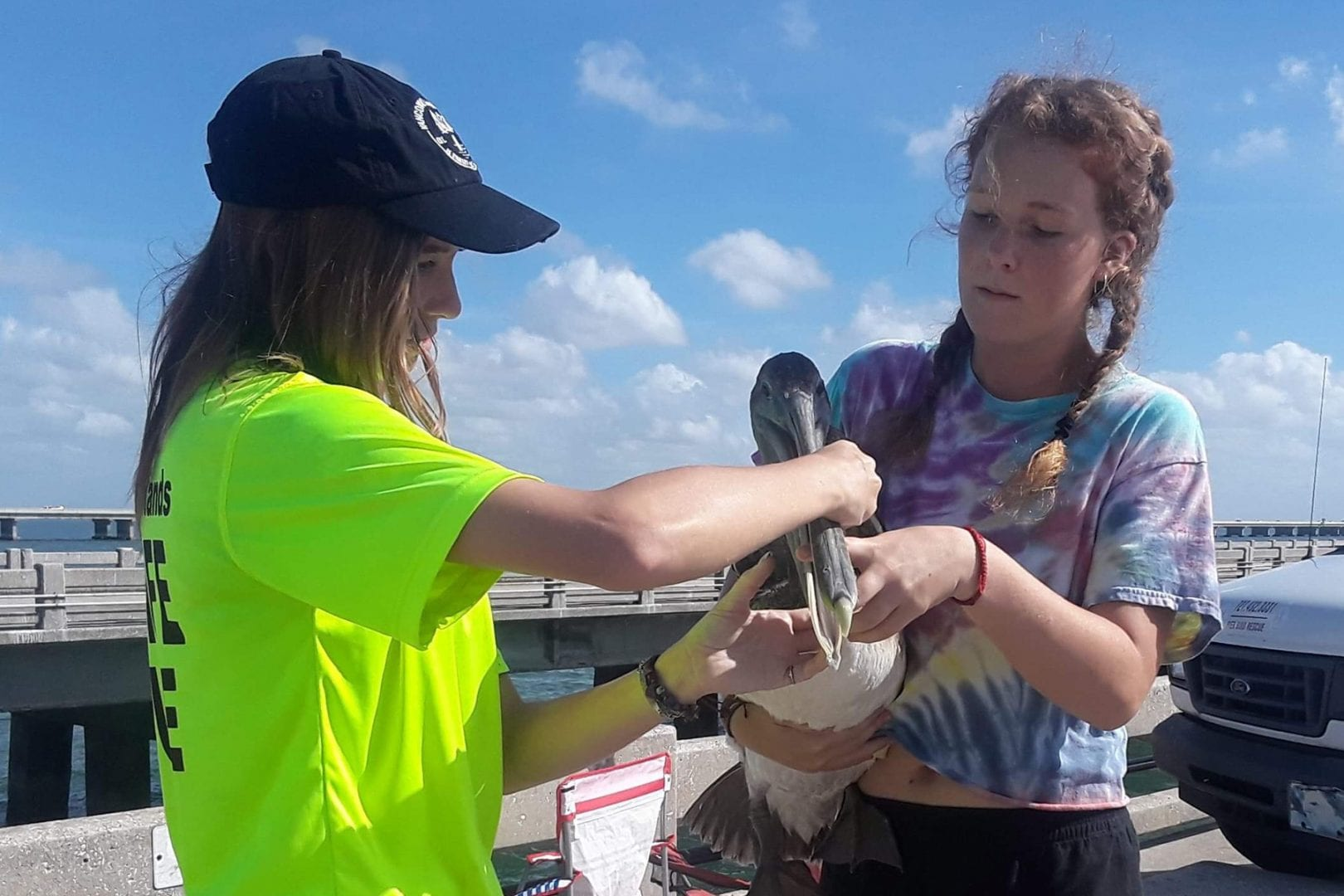 Two Eckerd students rescuing a brown pelican