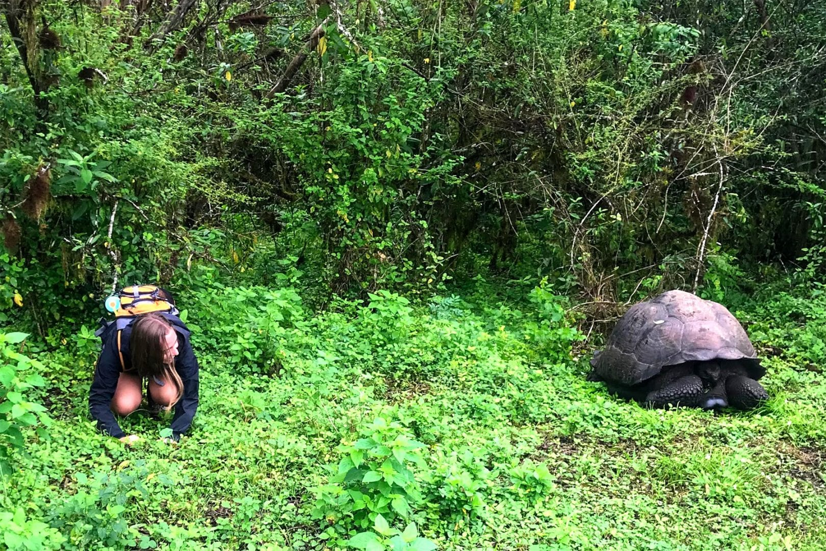 Student crouching near Galapagos tortoise