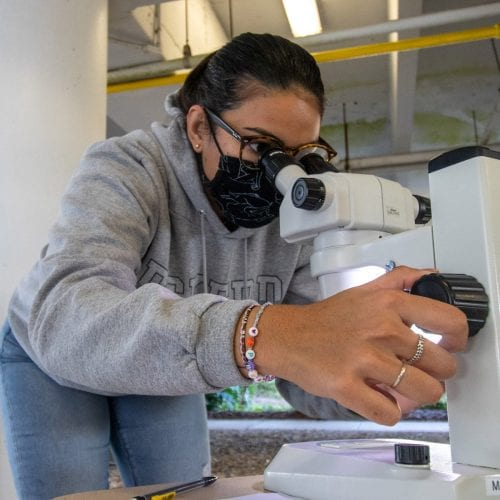 Janessa Benavidas '22 looks at a series of foraminifera during a lab for her winter term Deep Sea Exploration