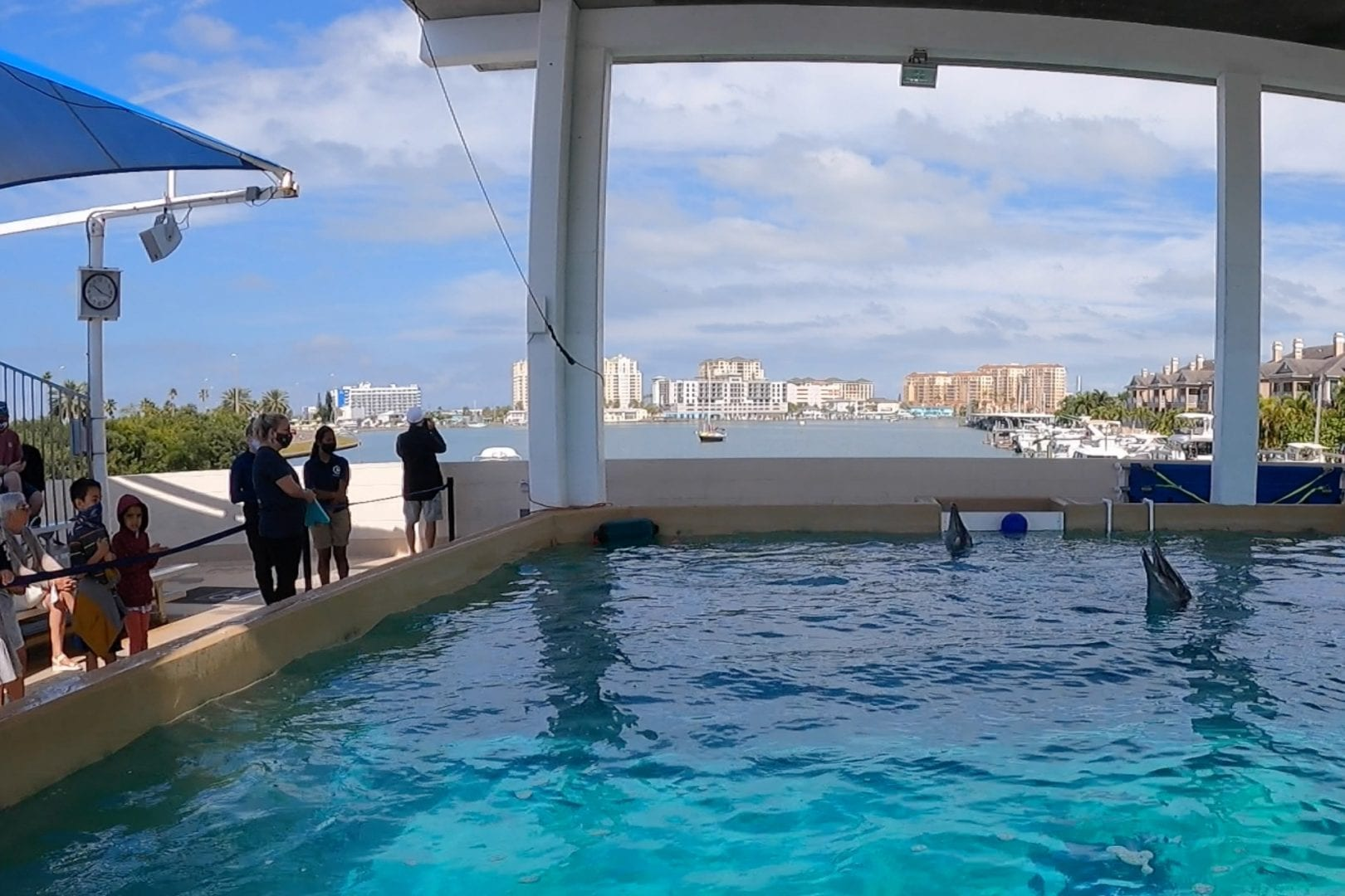 A dolphin swims in tank at Clearwater Aquarium