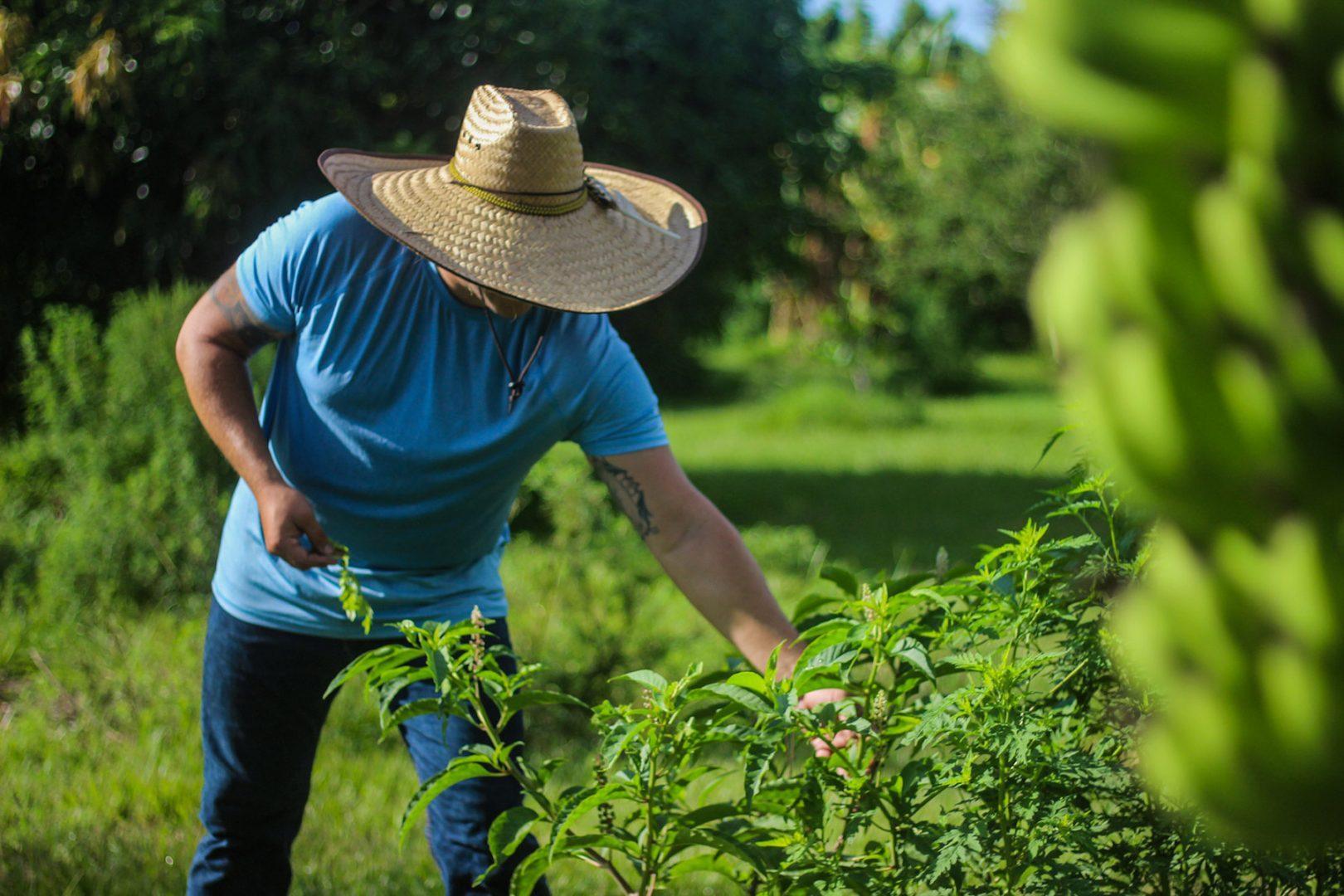 Farmer Jon picking from bushes in the Eckerd College garden