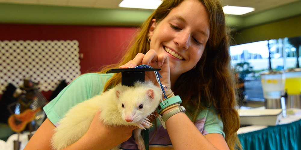 Female student holding a tiny graduation cap on her albino pet ferret's head