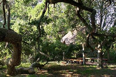 Trees and chickee hut near Fox Pond