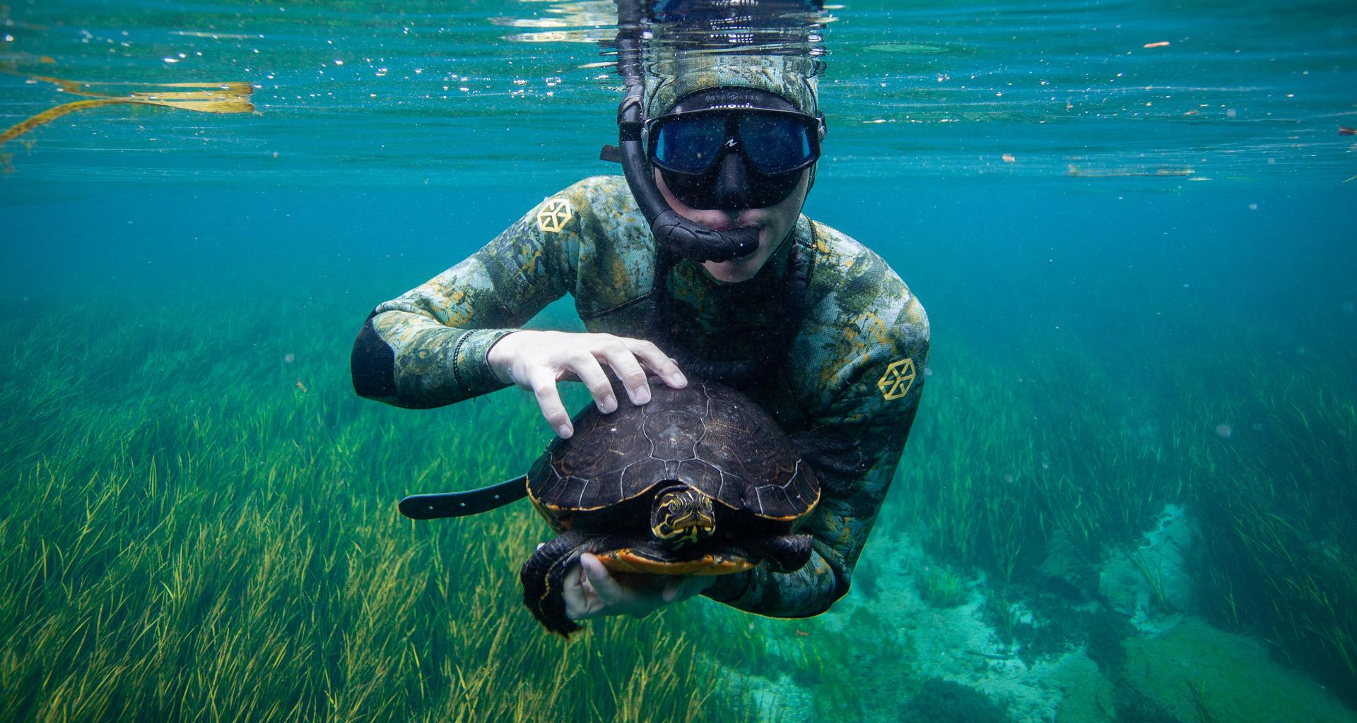 Eckerd student in snorkling gear under water holding turtle